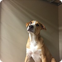Adopt A Pet :: Cheech - Snyder, TX