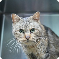 Adopt A Pet :: Marigold - Warwick, RI