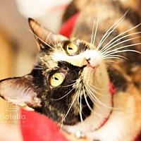 Adopt A Pet :: Lexi - Spring, TX
