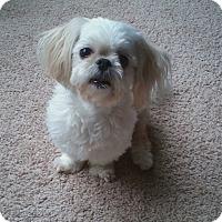 Adopt A Pet :: ABBYpending - Eden Prairie, MN