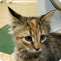 Adopt A Pet :: Tori - Hastings, NE