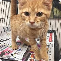 Adopt A Pet :: Monty - Marion, OH
