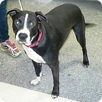Adopt A Pet :: Bogee - Eastpoint, FL