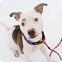 Adopt A Pet :: Weston - Cleveland, OH