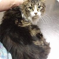 Adopt A Pet :: Nefertiti - Northfield, OH