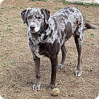 Adopt A Pet :: Sy - Homewood, AL