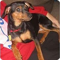 Adopt A Pet :: Winnie - Nashville, TN