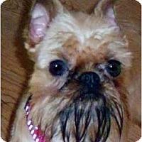 Adopt A Pet :: ROXIE  in Benton, AR. - Little Rock, AR