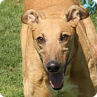 Adopt A Pet :: Opportunity - Santa Rosa, CA