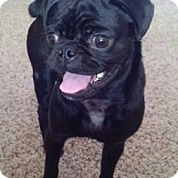 Adopt A Pet :: Lokee - Gig Harbor, WA