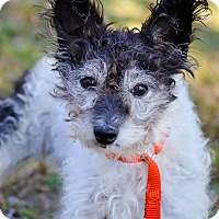 Adopt A Pet :: Thelma - Conyers, GA