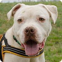 Adopt A Pet :: Winston - Greenwood, SC