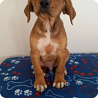 Adopt A Pet :: Yates - Westminster, CO