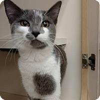 Adopt A Pet :: Jenny - Tampa, FL