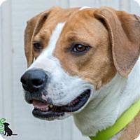 Adopt A Pet :: Andrea - Savannah, GA