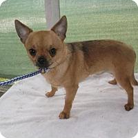 Adopt A Pet :: Billy Joe Mcallister - Bonifay, FL