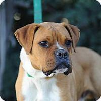 Adopt A Pet :: Fritz - Alameda, CA