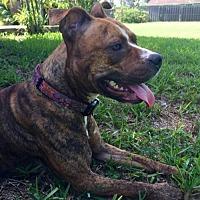 Adopt A Pet :: Honey - Royal Palm Beach, FL