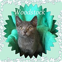 Adopt A Pet :: Woodstock - Covington, KY