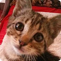 Adopt A Pet :: Jessie - corinne, UT