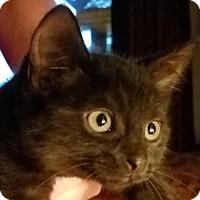 Adopt A Pet :: Glinda - Siren, WI