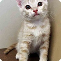 Adopt A Pet :: Garth - Oswego, IL