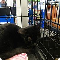 Adopt A Pet :: Jana - Avon, OH