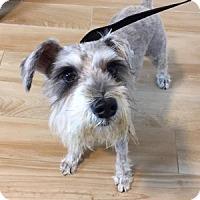 Adopt A Pet :: Eugene - Redondo Beach, CA