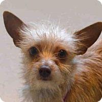 Adopt A Pet :: MACEY - Denver, CO