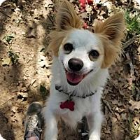 Adopt A Pet :: Tank - Flower Mound, TX