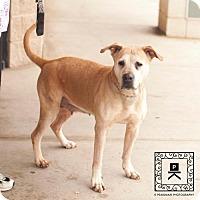 Adopt A Pet :: Spotsylvania Shelter #16-4082 'Zoie' - Fredericksburg, VA