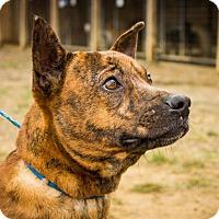 Adopt A Pet :: Short Stop - Jasper, AL