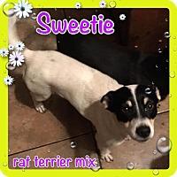 Adopt A Pet :: Sweetie - Bogalusa, LA