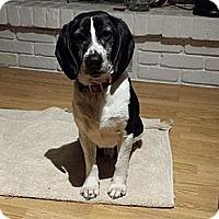 Adopt A Pet :: Noodle - Hamilton, ON