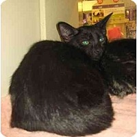 Adopt A Pet :: Mudpie - Jenkintown, PA