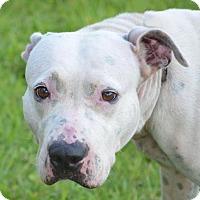 Adopt A Pet :: Zahara - Englewood, FL