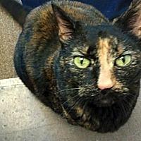 Adopt A Pet :: Zelda - Kingston, WA