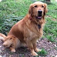 Adopt A Pet :: Ruggles - BIRMINGHAM, AL