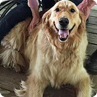 Adopt A Pet :: Lilly IV - BIRMINGHAM, AL