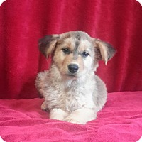 Adopt A Pet :: Caicos - Chester, IL