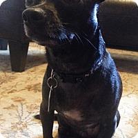 Adopt A Pet :: Dexter - Owatonna, MN
