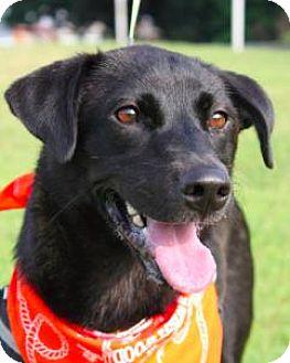 Labrador Retriever Mix Dog for adoption in San Ramon, California - Barbie