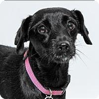 Adopt A Pet :: Cyprus - San Luis Obispo, CA