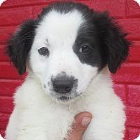 Adopt A Pet :: Erin - Reeds Spring, MO
