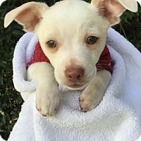 Adopt A Pet :: August - Santa Cruz, CA