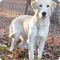 Adopt A Pet :: Boomer - Bedminster, NJ