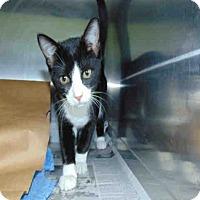Adopt A Pet :: Jazzy - St. Cloud, FL