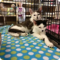 Adopt A Pet :: Saunders - Avon, OH