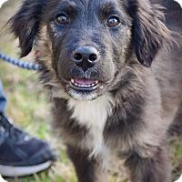 Adopt A Pet :: Denver - DFW, TX