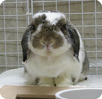 Lop-Eared Mix for adoption in North Gower, Ontario - Smores
